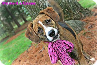 Labrador Retriever/Beagle Mix Dog for adoption in Paducah, Kentucky - Brownie