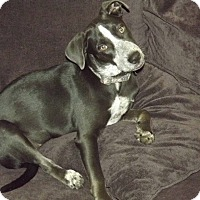 Adopt A Pet :: Matilda (Tilly) - Phoenix, AZ