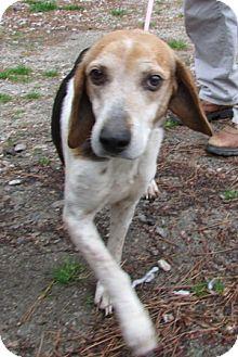 Hound (Unknown Type) Mix Dog for adoption in Warrenton, North Carolina - Hank