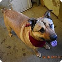 Adopt A Pet :: Rocky - Walthill, NE