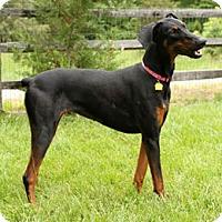 Adopt A Pet :: MATRI - Greensboro, NC