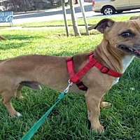 Adopt A Pet :: DUKE - Alameda, CA