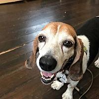 Adopt A Pet :: Hank - Folsom, LA