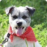 Adopt A Pet :: Jake - Corona, CA