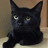 Adopt A Pet :: Thomas - Morganton, NC