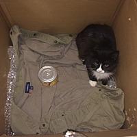 Adopt A Pet :: Penelope - Monroe, CT