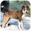 Photo 1 - Australian Shepherd Mix Dog for adoption in Cleveland, Georgia - Sissy