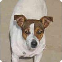 Adopt A Pet :: MOLLY - Phoenix, AZ