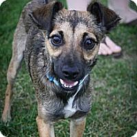 Adopt A Pet :: Kiowa - Broomfield, CO