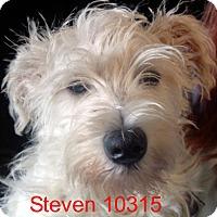 Adopt A Pet :: Steven - Greencastle, NC