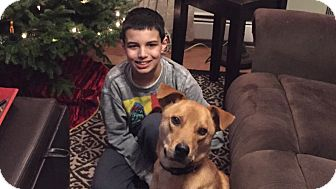 Labrador Retriever Mix Dog for adoption in Freehold, New Jersey - Romeo
