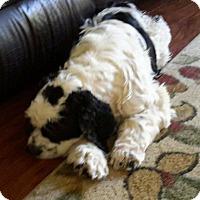 Adopt A Pet :: Willie - Toluca Lake, CA