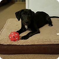 Adopt A Pet :: Waylon - Byhalia, MS