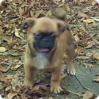 Adopt A Pet :: Porkie- ADOPTION PENDING!! - Antioch, IL