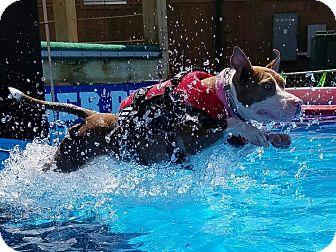 Pit Bull Terrier Mix Dog for adoption in Alpharetta, Georgia - Bessie