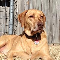 Adopt A Pet :: DIVA - Carrollton, TX