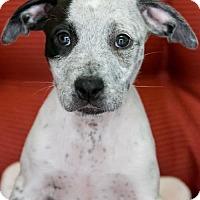 Adopt A Pet :: Little Luna - Miami, FL