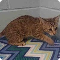Adopt A Pet :: Anna - St. Cloud, FL