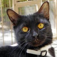 Adopt A Pet :: Tippurr - Mountain Center, CA