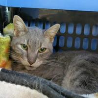 Adopt A Pet :: Papa - Northbrook, IL