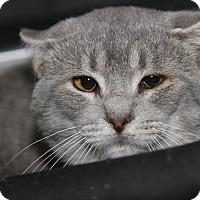 Adopt A Pet :: Shorty - Marietta, OH