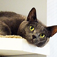 Adopt A Pet :: Miska - Lincoln, NE