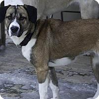 Adopt A Pet :: BeBe - Hamilton, ON