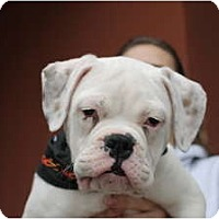 Adopt A Pet :: Patton - ARDEN, NC