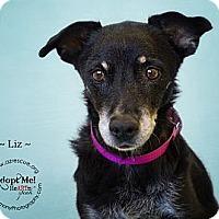 Adopt A Pet :: Liz - Phoenix, AZ