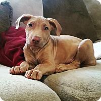 Adopt A Pet :: Byrdie Boyd - nashville, TN
