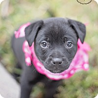 Adopt A Pet :: Lily - Kingwood, TX