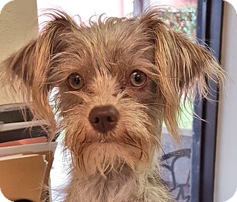 Terrier (Unknown Type, Small) Mix Dog for adoption in Deer Park, Texas - Phobee