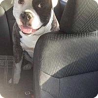 Adopt A Pet :: Leo - Hardeeville, SC