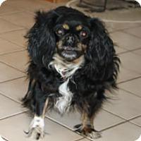Adopt A Pet :: Luna - Avon, NY
