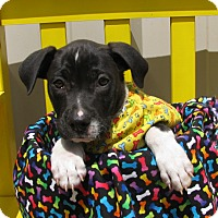 Adopt A Pet :: Thibodeaux - South Dennis, MA