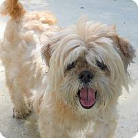 Adopt A Pet :: Tazz - Manning, SC