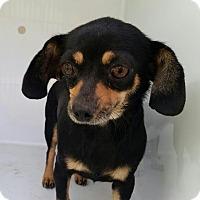 Adopt A Pet :: Minig - West Warwick, RI