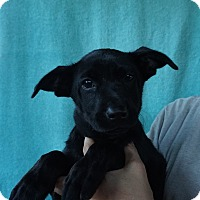 Adopt A Pet :: Knight - Oviedo, FL