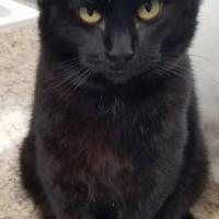Adopt A Pet :: Sherlock - Carroll, IA