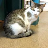 Adopt A Pet :: Sidda - Cumming, GA