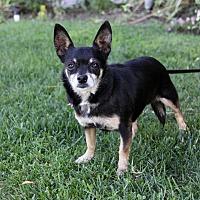 Adopt A Pet :: STACY - Newport Beach, CA