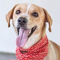 Adopt A Pet :: Pogo - Nanaimo, BC