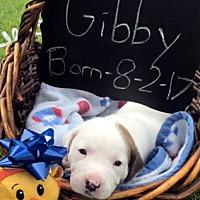 Adopt A Pet :: GIBBY - ADOPTION PENDING! - Pennsville, NJ