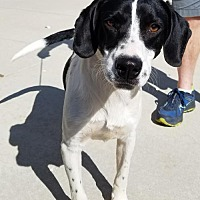 Adopt A Pet :: Slade - Hillside, IL