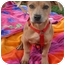 Photo 3 - Dachshund/Pug Mix Puppy for adoption in Sacramento, California - Sunshine cutest