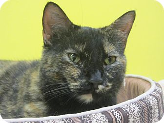 Domestic Shorthair Cat for adoption in Mobile, Alabama - Tia