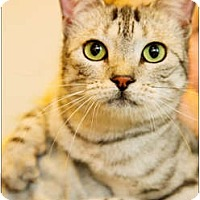 Adopt A Pet :: Georgia - Garland, TX