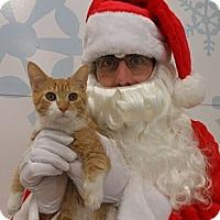 Adopt A Pet :: Carmel - Reston, VA