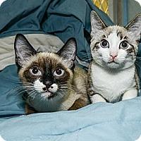 Adopt A Pet :: Emily - New York, NY