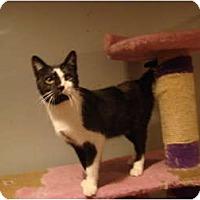 Adopt A Pet :: Finley--PETSMART - Muncie, IN